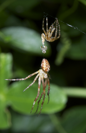 Spider - strange behaviour?