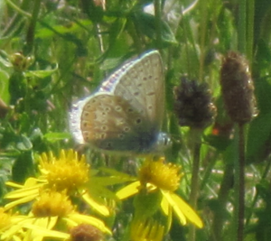 blue butterfly at UEA