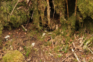 Wood Mouse burrow?