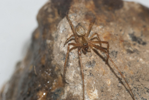 Unknown Brown Spider