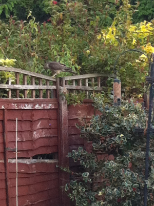 Bird of prey in garden