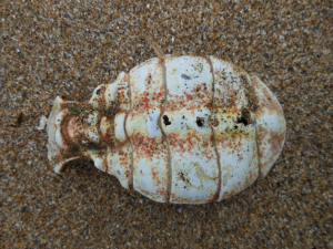 Crustacean remains on beach