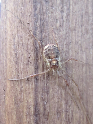 Spider 2 ID Required