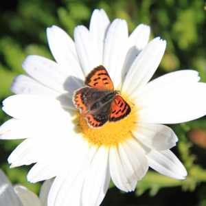 Small Copper Question