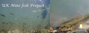 UK Mini Fish Project