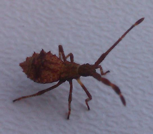 Unknown Bug