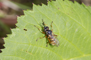 Unknown small wasp
