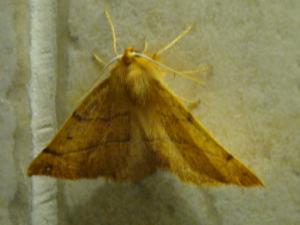 moth in the kitchen