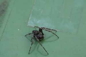 Unknown Spider sp.