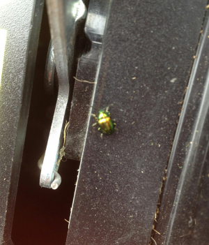 Small green beetle.