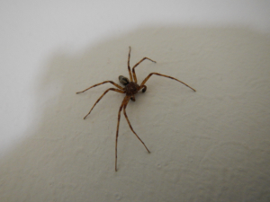 Spider ID Please! :)