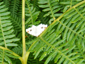 Ashdown Forest - Unknown Moth 1