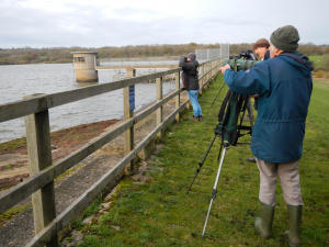 Weir Wood Reservoir Birding