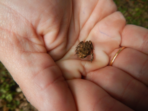 Knepp Rewilding Project - AES Field Trip - Toad