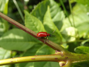 Saw this in our garden