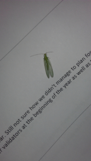 green insect in the office