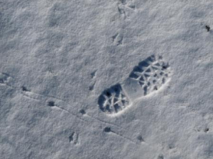small mammal tracks