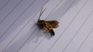 wasp type insect