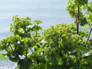Alexanders, Ventnor, Isle of Wight