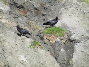 Ravens, Rocken End, Isle of Wight
