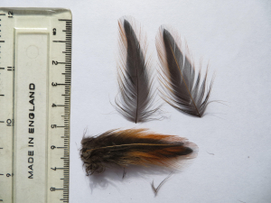 Unknown feather?