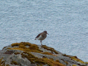 Unknown wader