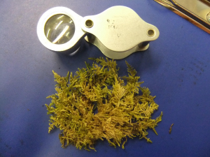 Moss from Barrow Fell, Lake District