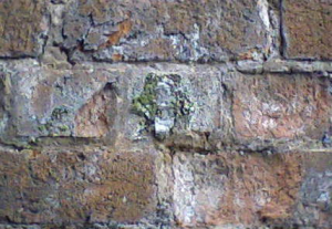 Grey Crutose on wall