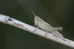 AnotherGrasshopper