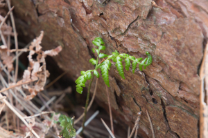 Which Fern If possible.from one frond.