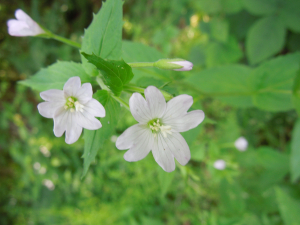 unknown whitish flower