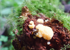 Slime Mould or Eggs?