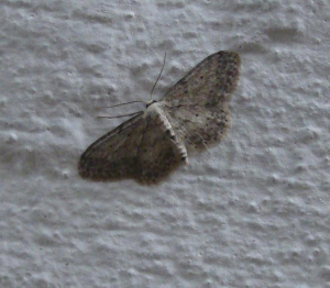 Moth id please