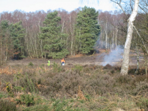 Heathland clearance at Sheets Heath