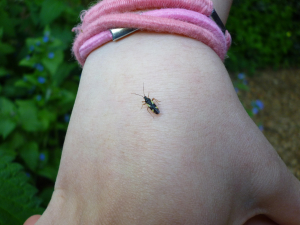 black and yellow beetle