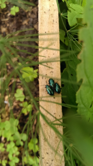blue/green beetle