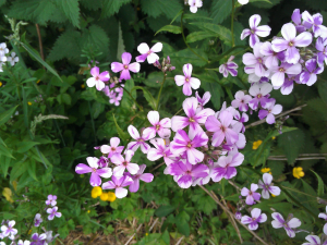pale purple flowers
