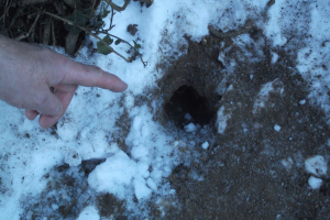 Burrowing animal hole and footprint