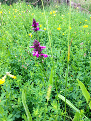 Wildflower on the park