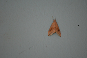 moth for id please