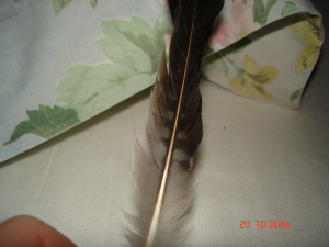 unknown feather