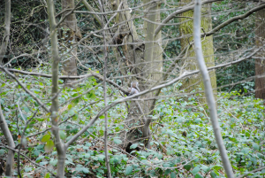 Hockley Woods observations