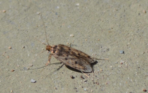 unknown flying insect