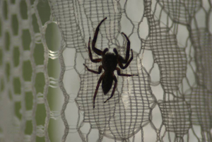 spider on a curtain