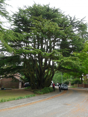 Impressive & unusual tree