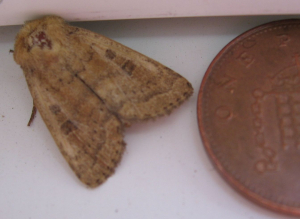 Another JLB moth