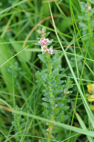 Small flower in woodland Northumberland