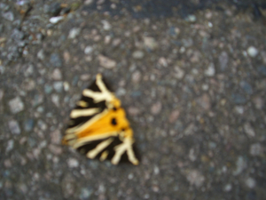 A large unidentified butterfly or moth
