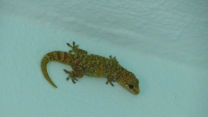 Possible Newt