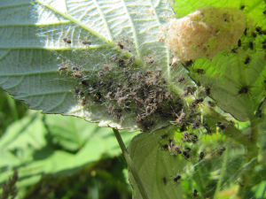 Spiderlings